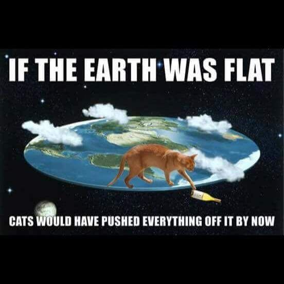 The only argument I need. +gnosis #cat #funny #flatearth #haha #logic <br>http://pic.twitter.com/nlhfvfBDJB