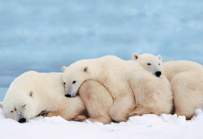 #mondaymotivation is hug a polar bear #climatechange is real but now #TrumpLies and want to pull USA out all our kids future at risk #love  <br>http://pic.twitter.com/RTbKuLZpmz