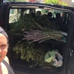 The morning haul :) #medicinalplants #fieldwork #pharmacognosy #ethnobotany #italy #QuaveLab