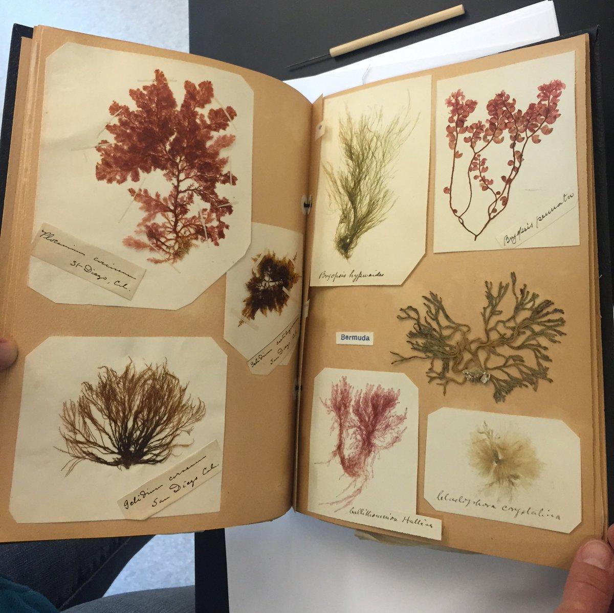 Psu Herbarium Psh Psherbarium Twitter