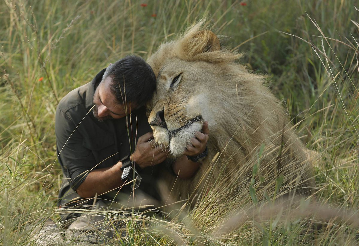 #africa South Africa\'s \'lion whisperer\' gets up close with big cats - WTOP