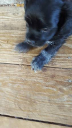Male Puppies ❯❯   ❮❮ #Dogs #Puppies #DogFinder #AdoptADog