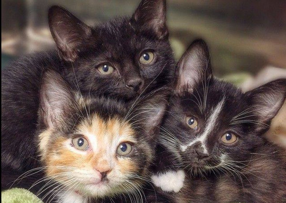 Check out these three kitties........WANT!!!!   [See ALL our best cat Pix here -