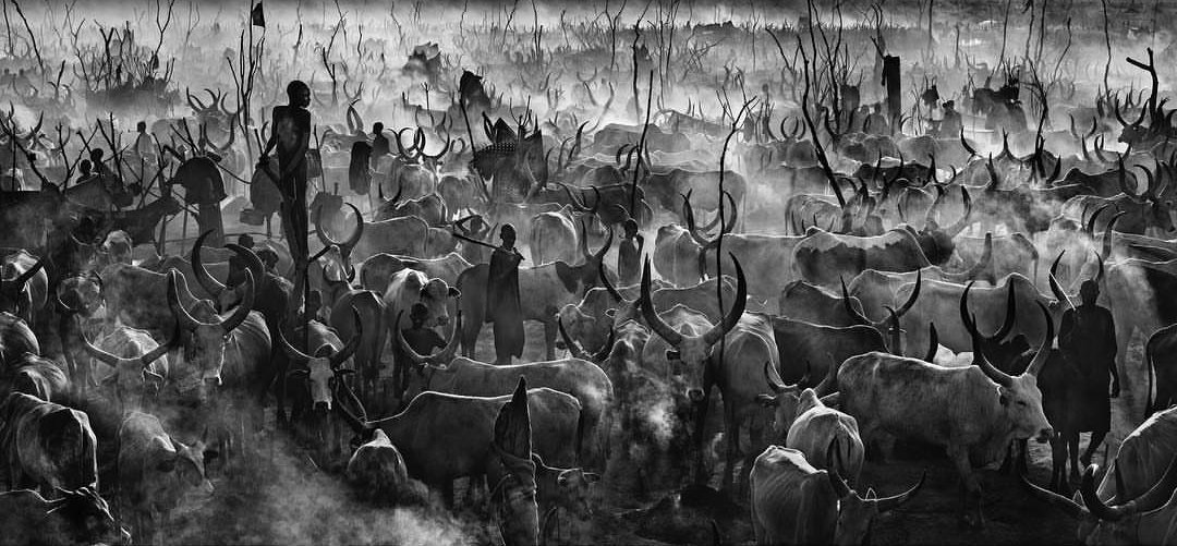 This photo by David Yarrow sold for 60,000 British Pounds. Piga hesabu. That's Kshs8,000,000/- Sasa rudi kazini. https://t.co/J3tCZJtmgi