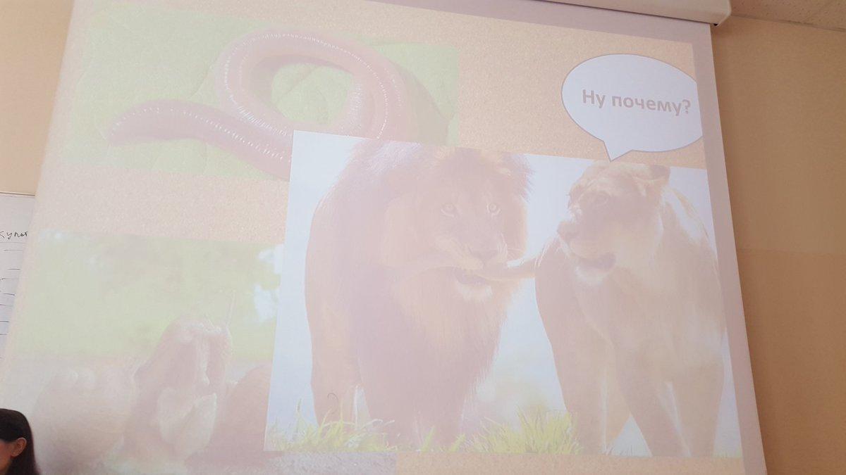 Презентация про волка