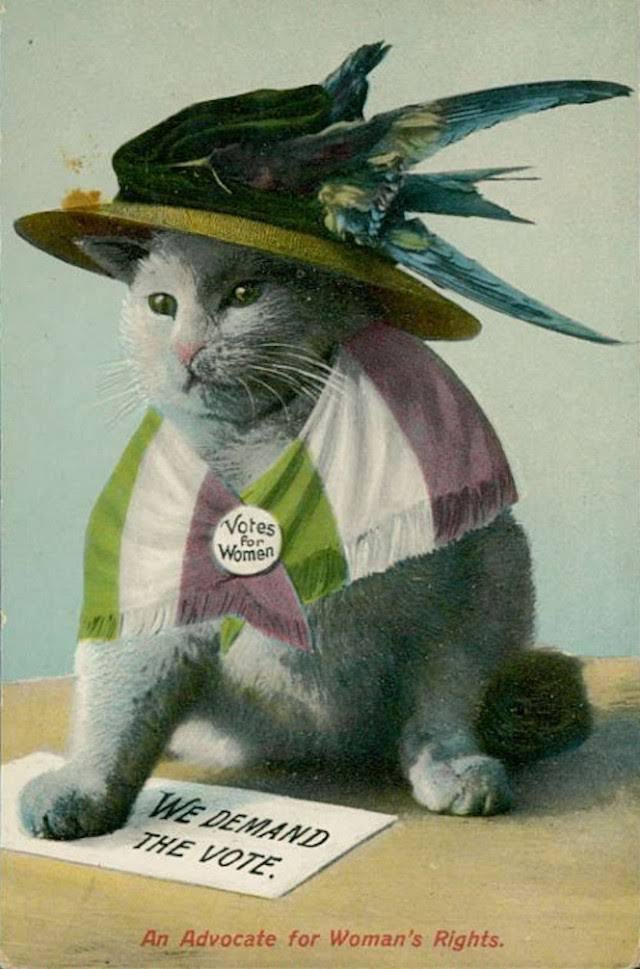 Suffragette Cat says if you&#39;re not registered to vote do so before midnight #Election2017 <br>http://pic.twitter.com/FDiDHllAXc