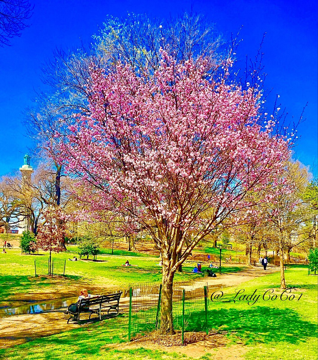 There is always music amongst the trees... but our hearts must be very quiet to hear it.  ~ Minnie Aumonier  #SpringtimeInNYC #NYC #Brooklyn <br>http://pic.twitter.com/O5L9ufZh2F