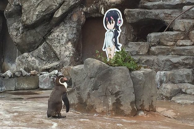 This penguin was dumped by his girlfriend and is now in love with an anime cutout
