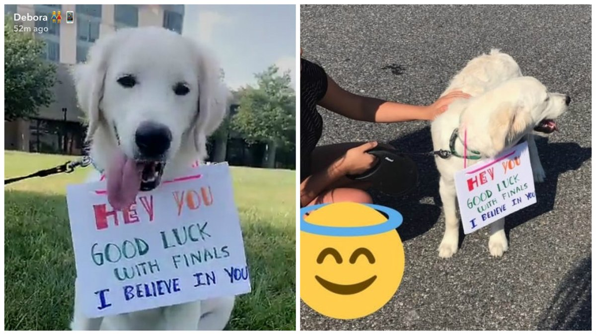 This college student brought her puppy, Bailey, to school to cheer up her stressed classmates