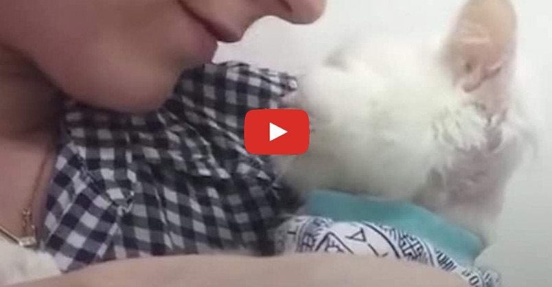 Cat Found Starving Is So Loved Now CLICK to watch >