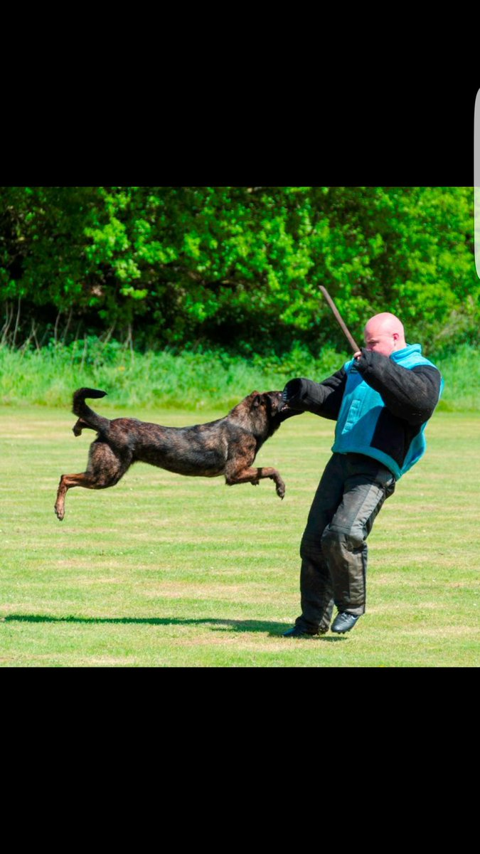 Action shot! Really pleased with PD Izzy at the Nationals #NPDT2017 LH