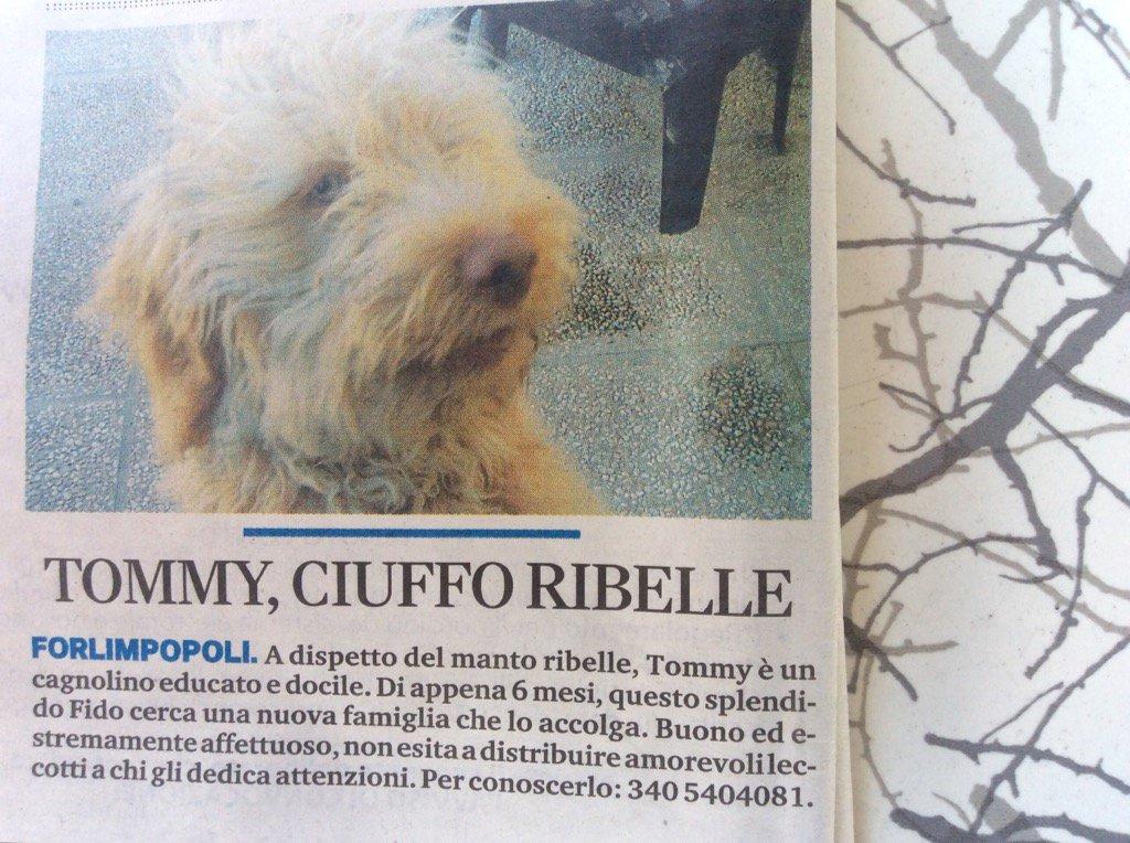 Retweeted Grazia Iotti (@GraziaIotti):  Cucciolotto cerca mamma ❤ Aiutiamolo!!!!🙏🙏🙏🙏🙏🙏🙏