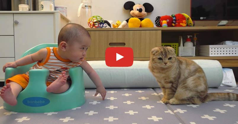 Too Cute! Baby Tries to Make Friends With Cats CLICK to watch >