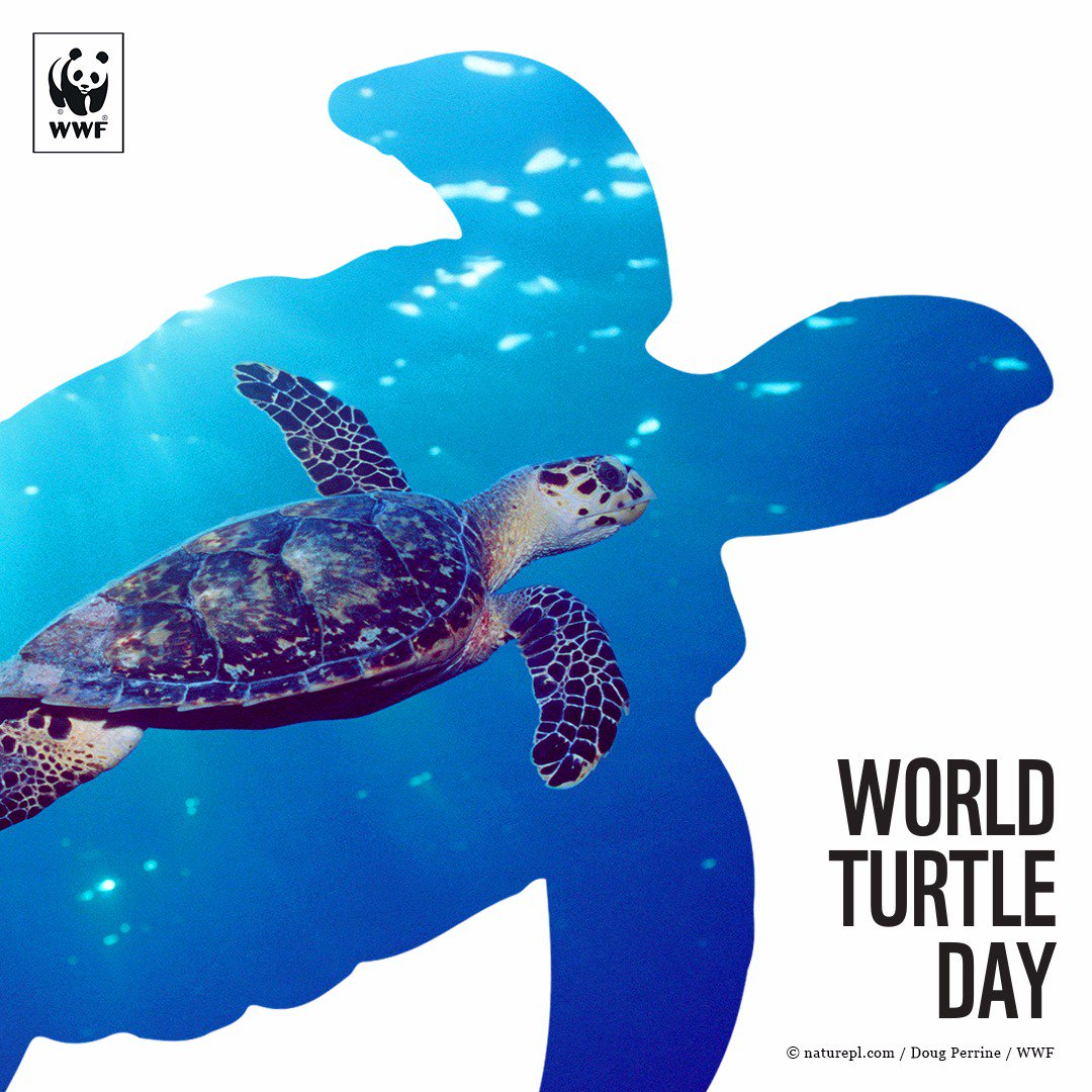 Happy #WorldTurtleDay! Jaga penyu untuk lestarikan laut kita @WWF_ID https://t.co/CIw4yG3igG