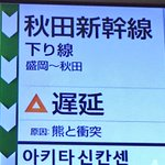 くまーっ!Σ(゚д゚   ) pic.twitter.com/GjdbczSBdI