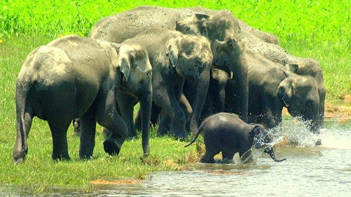 Beautiful view#Elephants family #be always kind#love #animals and nature.<br>http://pic.twitter.com/aFgamdSghK