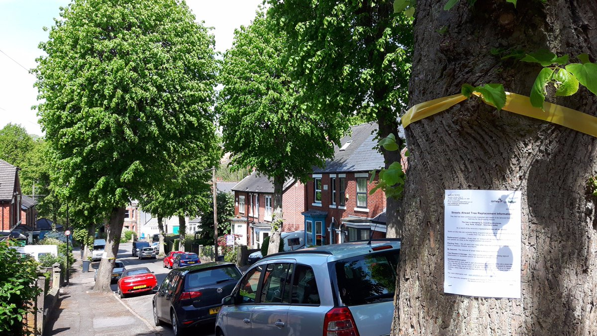 6 #trees to be felled next week in our road @LouHaigh. Your last chance to help your constituents now. #election issue. @TheSadSquirrel<br>http://pic.twitter.com/fjzxDZD3UK