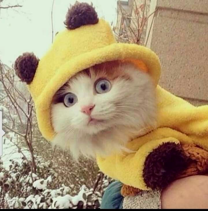 Isn&#39;t this #kitty just #adorable #omg <br>http://pic.twitter.com/NiIUYS6sJa