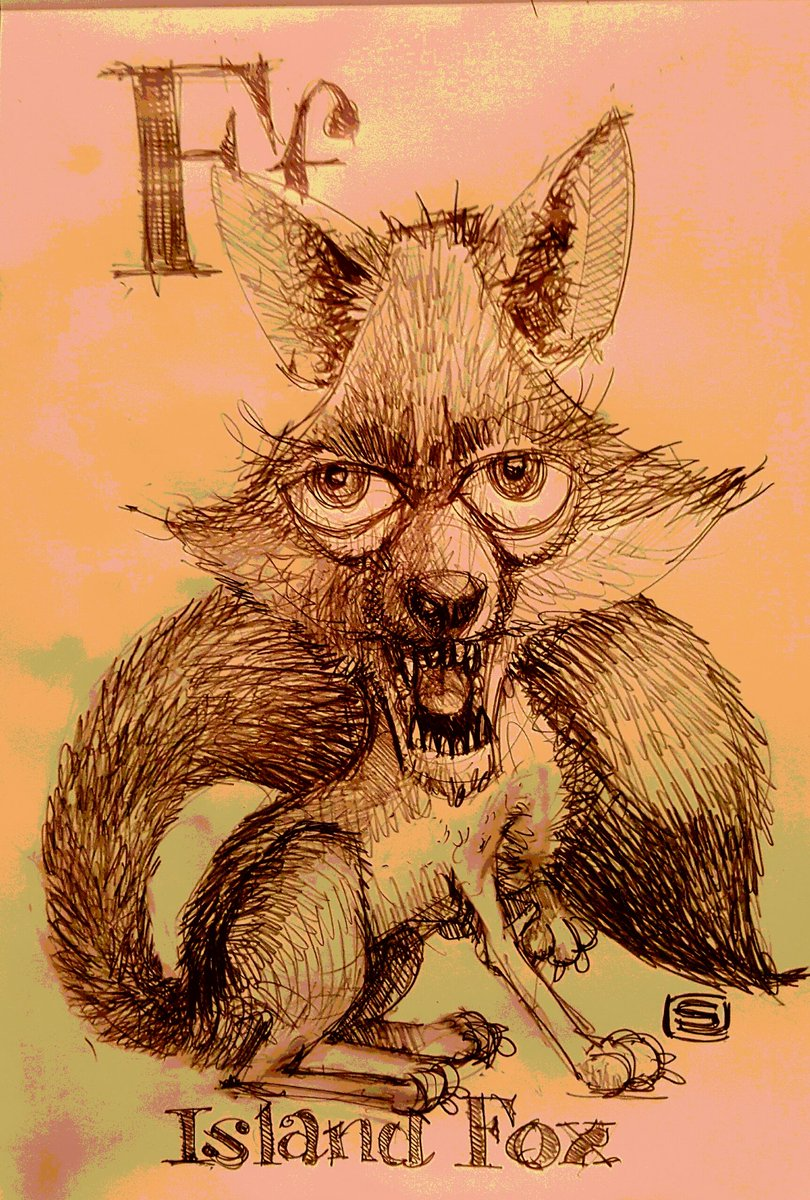#AnimalAlphabets for the letter &#39;F&#39; we have a #islandfox #endangeredspecies  #pencil #PoolDoodle<br>http://pic.twitter.com/t0Tbcs93VK