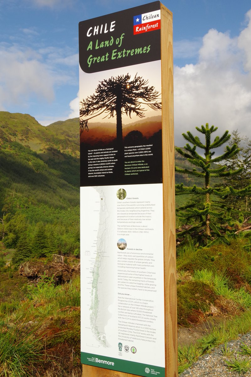 #Chile @BenmoreBotGdn @TheBotanics lots of South American interest in our Chilean #Rainforest here are images of just a few @VisitCowal<br>http://pic.twitter.com/i6IfGa6PRI