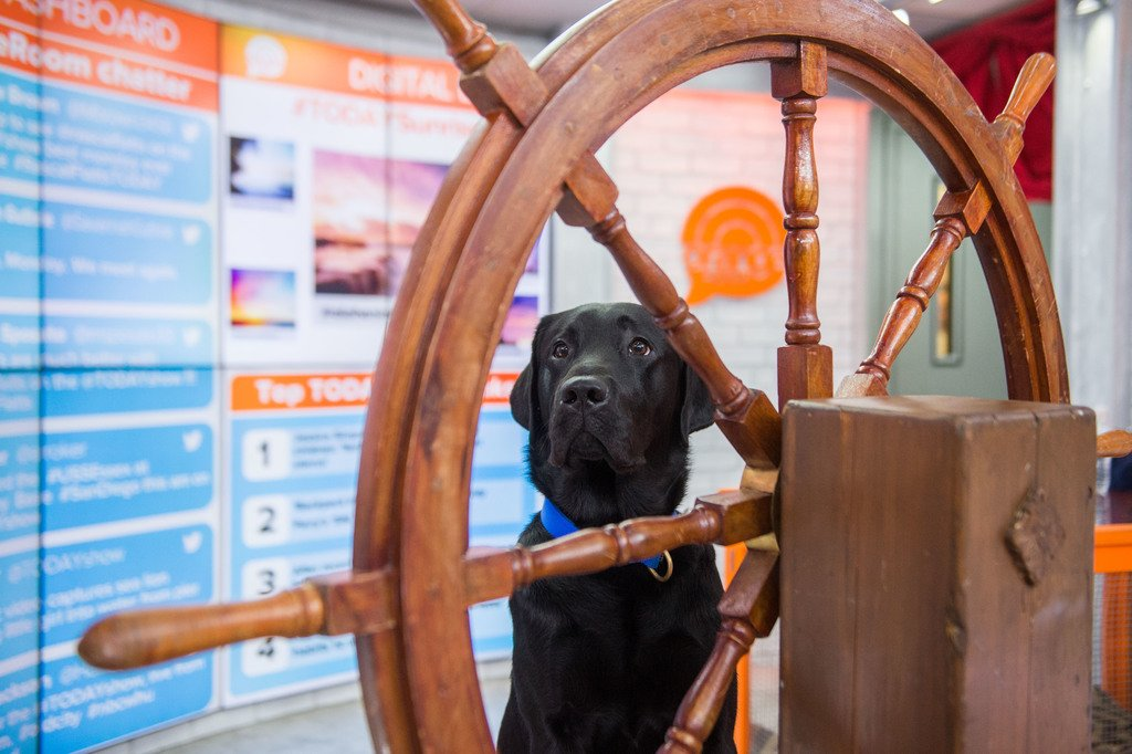 All aboard The Pup Boat! #TODAYPuppy