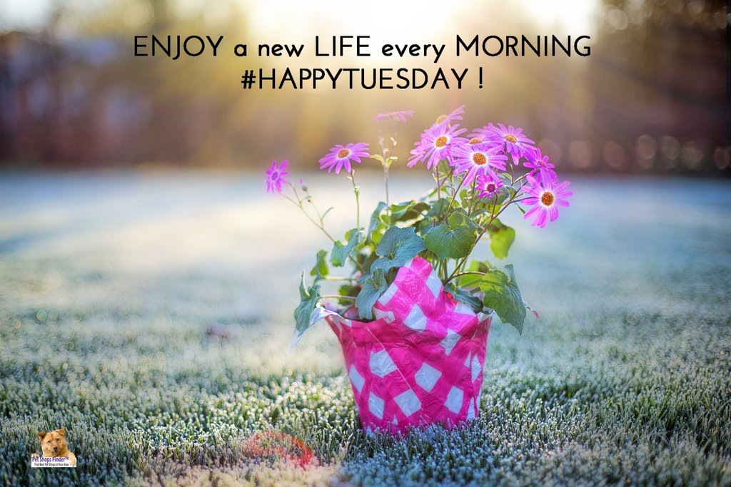 #Enjoy a #New #Life every #Morning #HappyTuesday #Pets #Animals #PetCare #PetShop <br>http://pic.twitter.com/qBOM1KSNfQ
