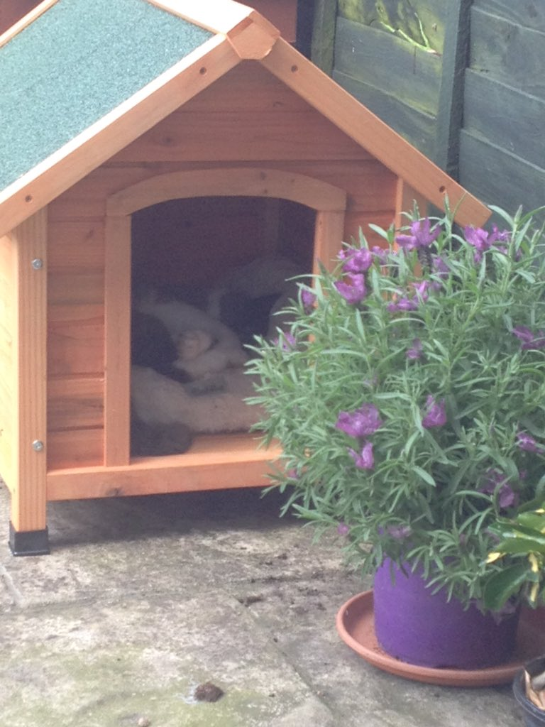 Today there is no good news, however just caught \'my\' cat using his kitty kennel & it\'s made my day. 💚