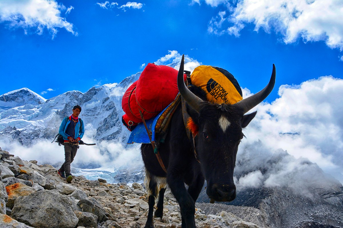 Yak in the mountains! #Nepal #EBC #Everest<br>http://pic.twitter.com/Up6uuo73YH