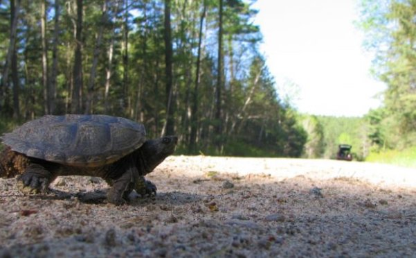 The top 4 tips you need to help #turtles cross the road: https://t.co/PXdumMQxu6 #WorldTurtleDay #Ontario https://t.co/Rdam1sgtKw