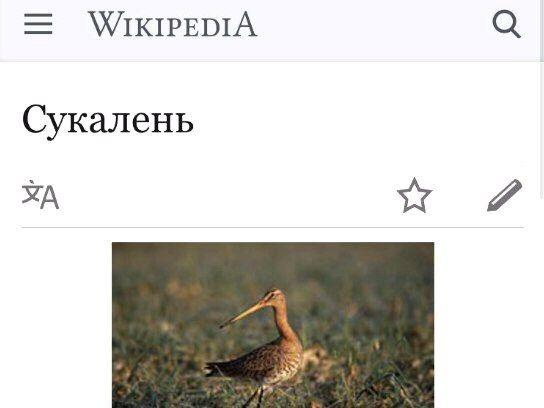Если бы я был птицей: