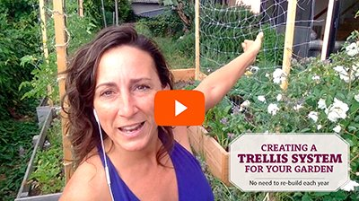 Build a Trellis System for Your Garden