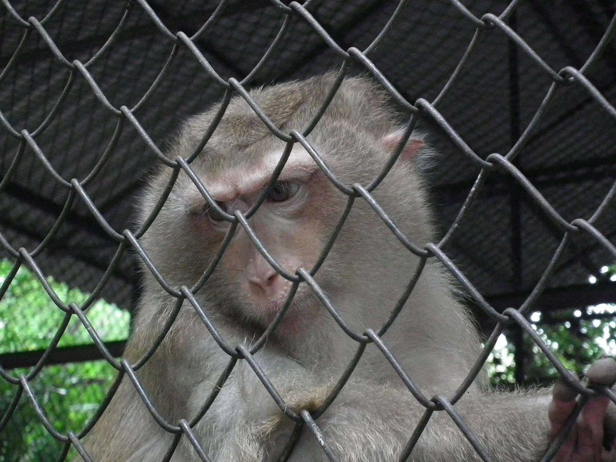 &#39;Monkey at Temple &#39; Animals  http:// eyesshare.co.uk/ProjectRetail/ Default/Translator.php?page=Main.html&amp;subpage=/WebRetail/Pages/Shop/CreatorProducts.html&amp;creator=6&amp;product=51&amp;app=eyes &nbsp; …  #shutter #night<br>http://pic.twitter.com/EG2ZHHrHWN