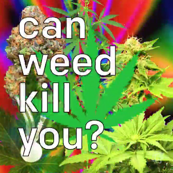 Smoking too much weed can't kill you, ca...