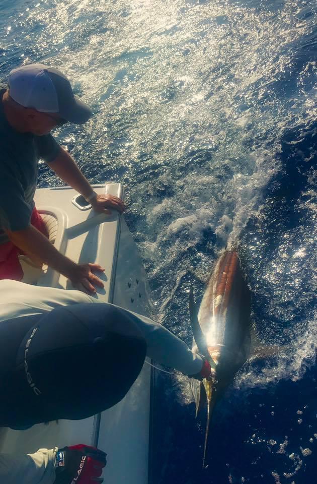 Kona, HI - Kona Blue released a Blue Marlin.