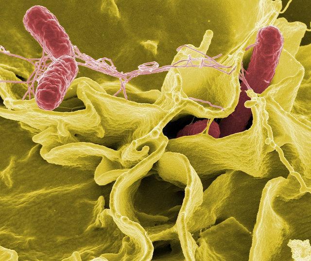 Salmonella in salame dall'Italia ritirato dal mercato europeo