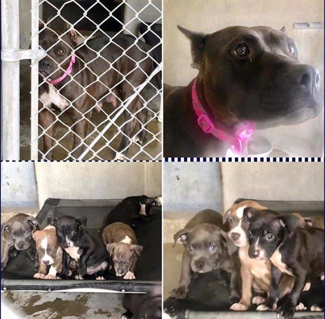 #CA #LA #SanBernardino #SOS URGENT PLEA MOMMA &amp; 10 #PUPPIES need immediate #rescue #foster SHELTER IS  FULL! HELP!  https://www. facebook.com/29892759355943 9/photos/a.1003146766470848.1073741921.298927593559439/1309473322504856/?type=3 &nbsp; … <br>http://pic.twitter.com/fHj3H0f7fE
