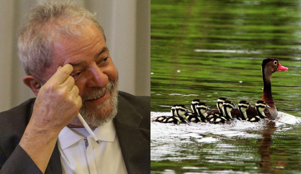 Em e-mail, Lula quis saber 'quem comeu os marrecos' do sítio em Atibaia https://t.co/1tKcH39XrH