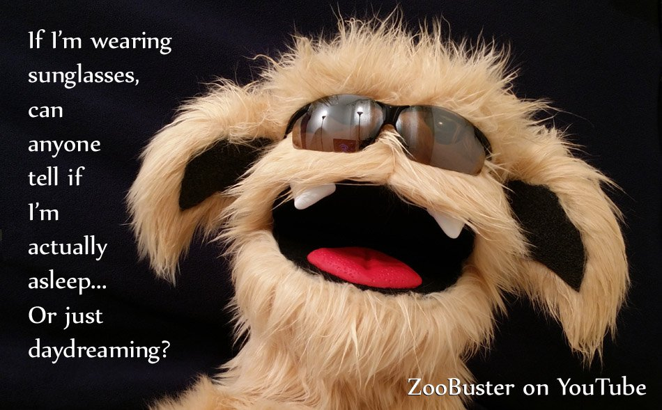 A New #ZooBuster Video is Out!   Watch it Now:  https:// youtu.be/DTBGqgzFwHE  &nbsp;    #muppets #sesamestreet #humor #jokes #quotes #kids #funny #youtube <br>http://pic.twitter.com/Yed7kn95Ne