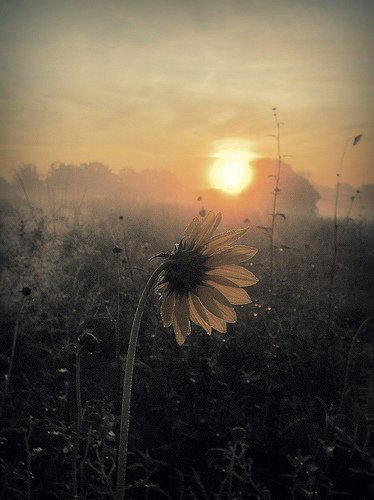 Good night everyone. peaceful &amp; silent night. #landscape #flower #sunset #peacekeeping<br>http://pic.twitter.com/WKAenJx4Kv