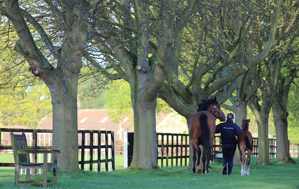 Looking for things to do on the #BankHoliday? Book onto the fantastic tours at @NatStudStallion with @DiscoverNKT &gt;  http:// bit.ly/1n28wyP  &nbsp;  <br>http://pic.twitter.com/O0WvUozhYf