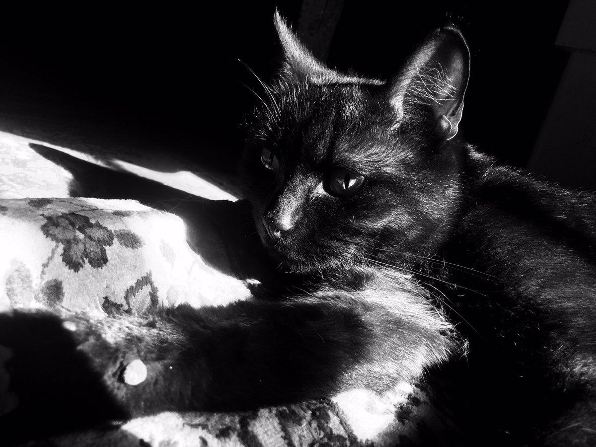 My love #cat #cats #ArtoriastheAbysswalker #NormanReedus #KurtCobain #love #black #white #spring #sleep #amazing #TWDfamily #Eyeinthedark<br>http://pic.twitter.com/D3MBb1Ytna