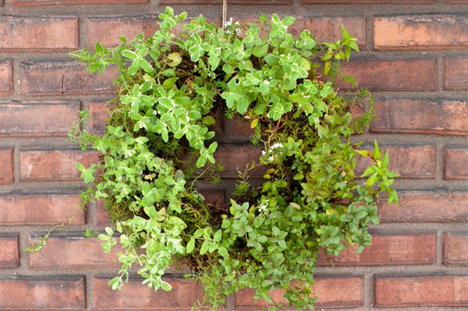 DIY project: Decorative living herb wreath