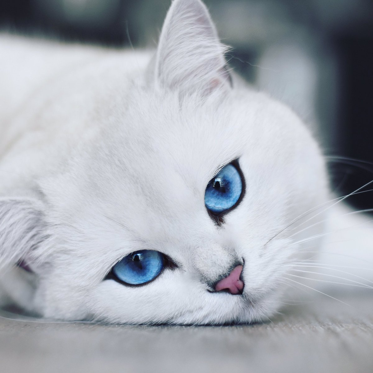 """Résultat de recherche d'images pour """"cobythecat"""""""