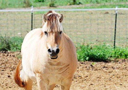 Is your #Equine #Metabolic #Syndrome #horse getting the #digestive support they need?  #Arenus #Assure   http:// buff.ly/2rhsonx  &nbsp;  <br>http://pic.twitter.com/zTkG0F997k