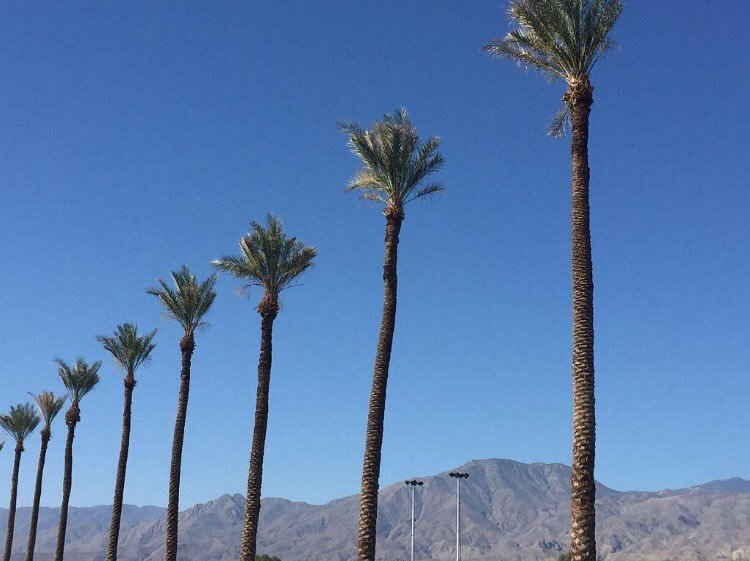 Missing @coachella   #palmtrees #skyporn  #Coachella pic.twitter.com/ezgqUKy9u1