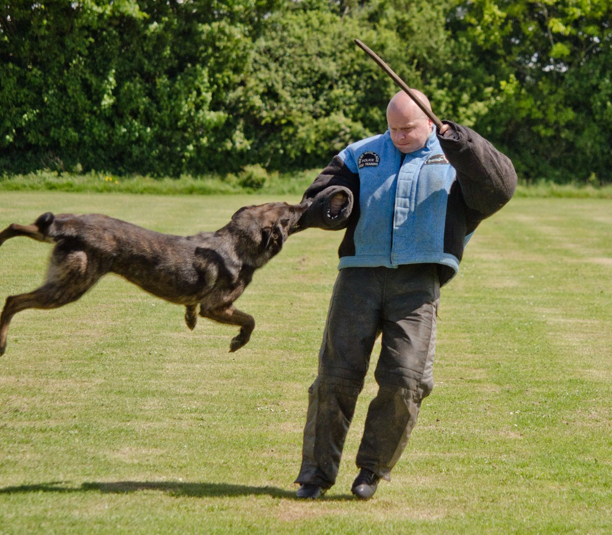 Here\'s PD Izzy becoming reacquainted with the infamous @wmpdogs Mr Angry at the @NPDT2017