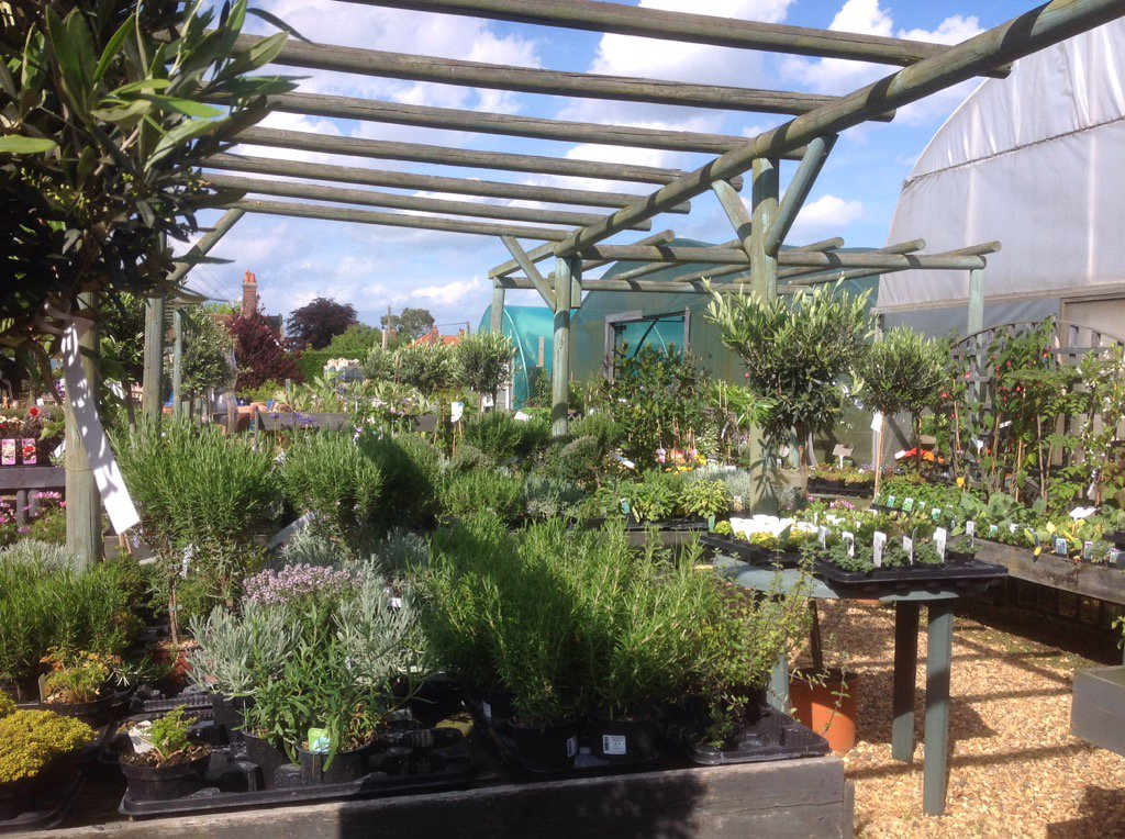 Extensive range of usual &amp; unusual plants. One of 8 hidden retail businesses #aldeburgh. Open throughout #bankholiday <br>http://pic.twitter.com/5JcLJoBcIi