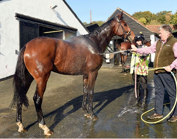 Stable Staff required. Join @PFNicholls & his team, Ditcheat.  #FullTime   Visit: https://t.co/ogzqzCm5Ij https://t.co/GVDQil34Mp