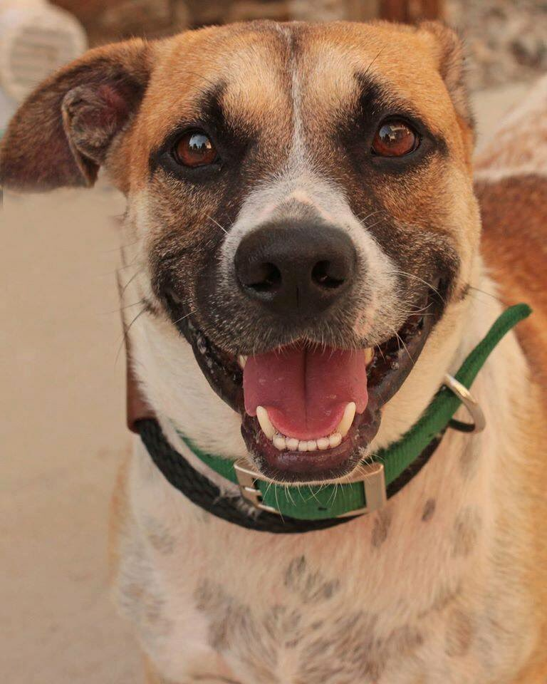 Look at that smile! Wow. Clover has a Pick Your Price adoption fee today only! @Providence_AC https://t.co/hmuXVkS3si