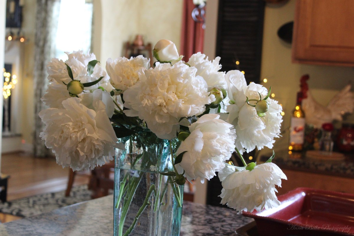 Peonies are one of my favorite #garden flowers to bring inside .....just have to make sure that all the visitors stay outside <br>http://pic.twitter.com/Et0eArMXOC